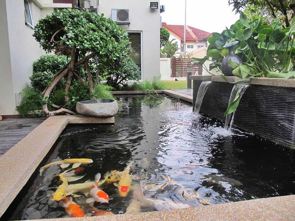 Desain Kolam Ikan Hias Belakang Rumah