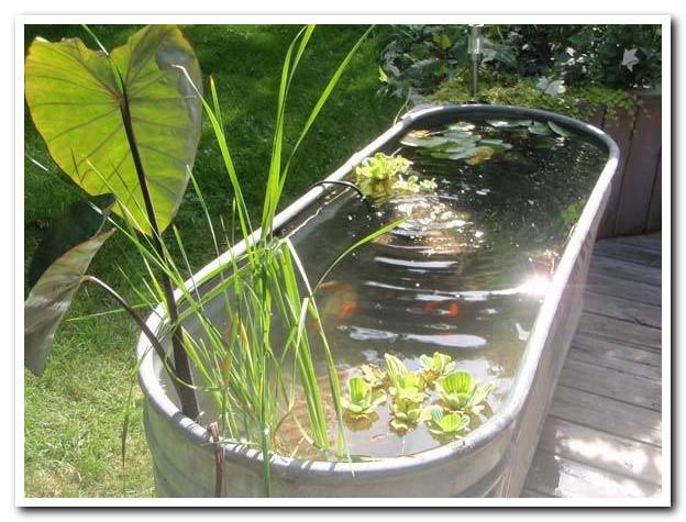contoh desain kolam ikan di halaman rumah