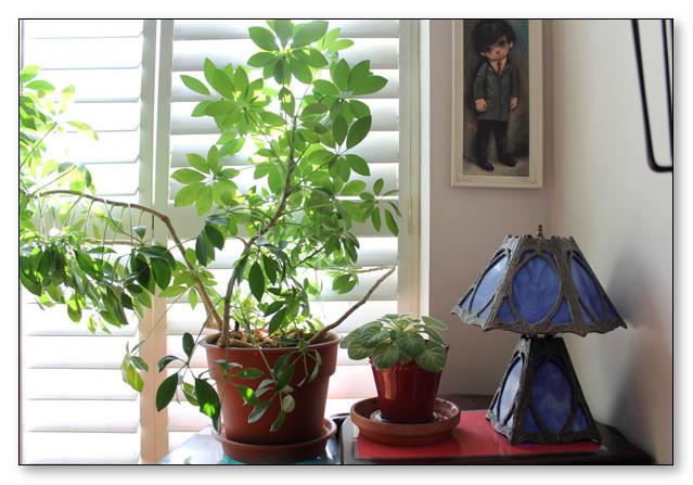 Tanaman Hidup pada interior rumah membuat udara segar mengalir di dalam rumah
