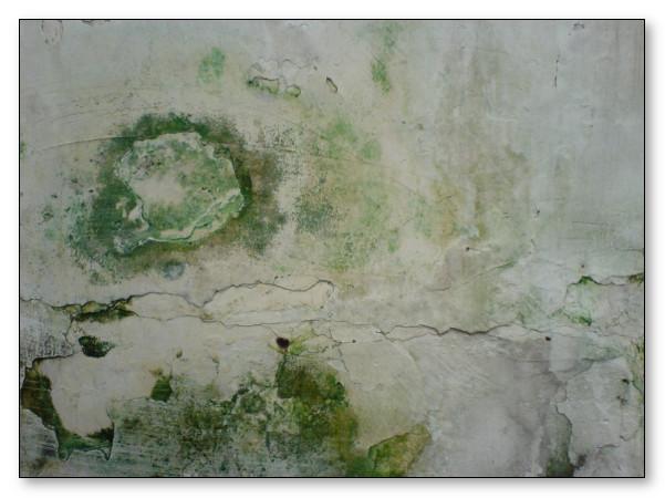 dinding lembab yang sudah parah hingga berjamur