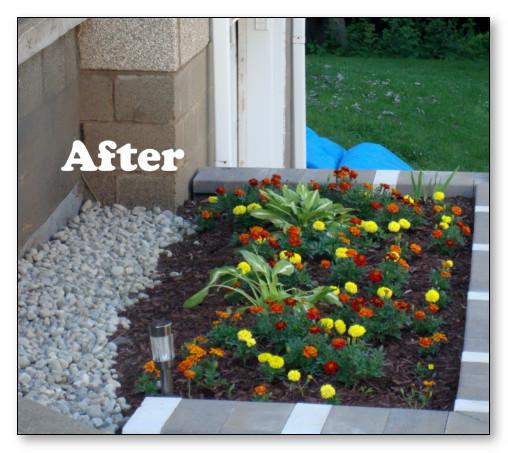 desain taman belakang dengan tanaman hias marigold
