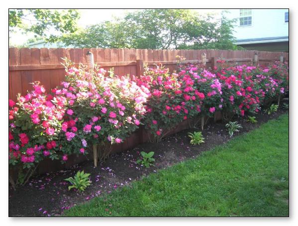 desain taman indah dengan bunga mawar