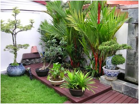 penataan tanaman yang rapi untuk taman minimalis 2016