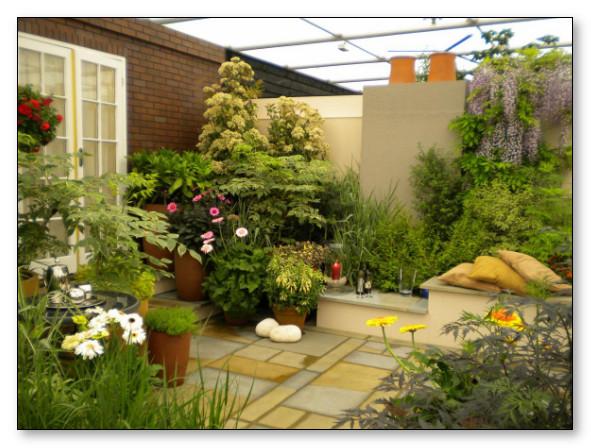 taman belakang rumah agar udara lebih segar