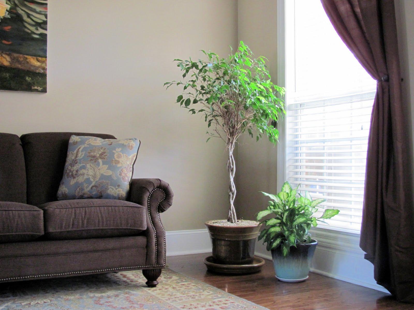 tanaman hidup di dalam ruangan