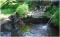 desain taman kolam terbaru 2017