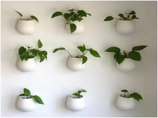 ilustrasi tanaman dinding di dalam rumah