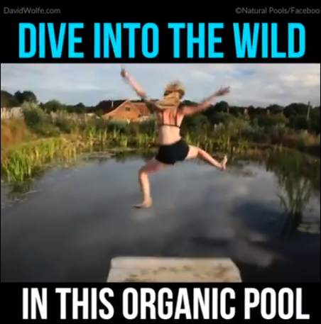 kolam renang organik