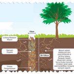 biopori cegah banjir