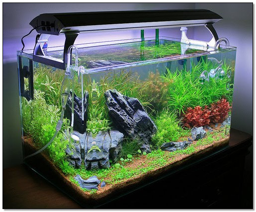 contoh aquascape desain interior ruangan