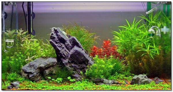 indahnya desain aquascape untuk interior ruangan