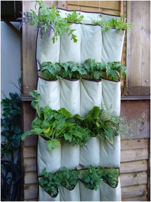 menanam sayuran di lahan vertikal