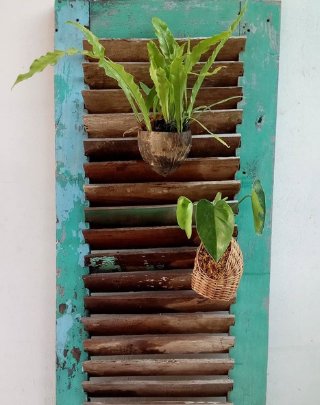 dekorasi rak pot dari jendela rustic bekas