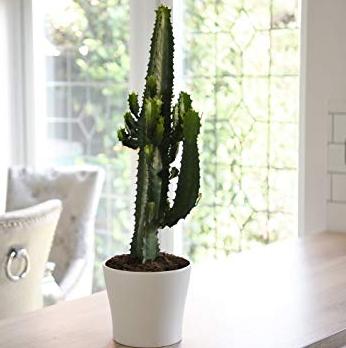 desain taman indoor dengan kaktus
