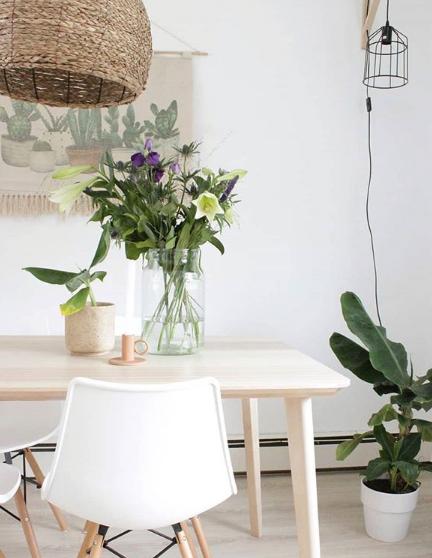 tanaman indoor yang cantik dan segar