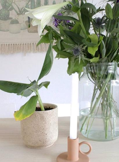 tanaman segar hijau pada ruang dalam