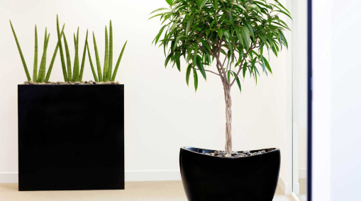 contoh tanaman indoor pada ruang kerja