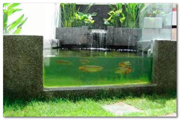 Kolam Ikan Arwana dengan Kaca