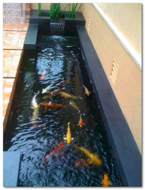 Kolam Ikan Beton Ikan Koi