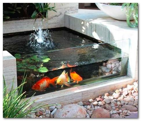Kolam Ikan Beton dengan Kaca