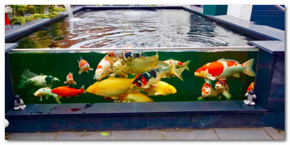 Kolam Ikan Koi dengan kaca