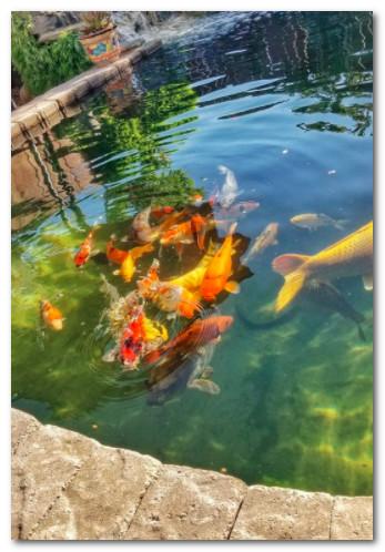 Kolam Ikan Nuansa Alami